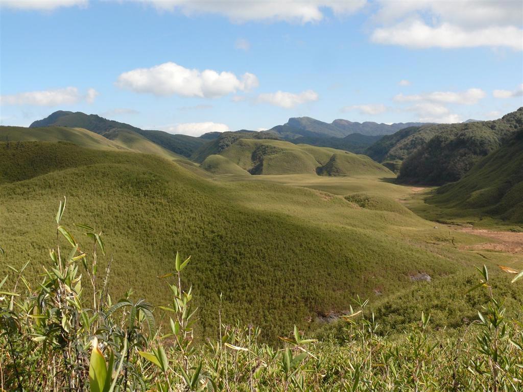 Dzukou Valley Nagaland
