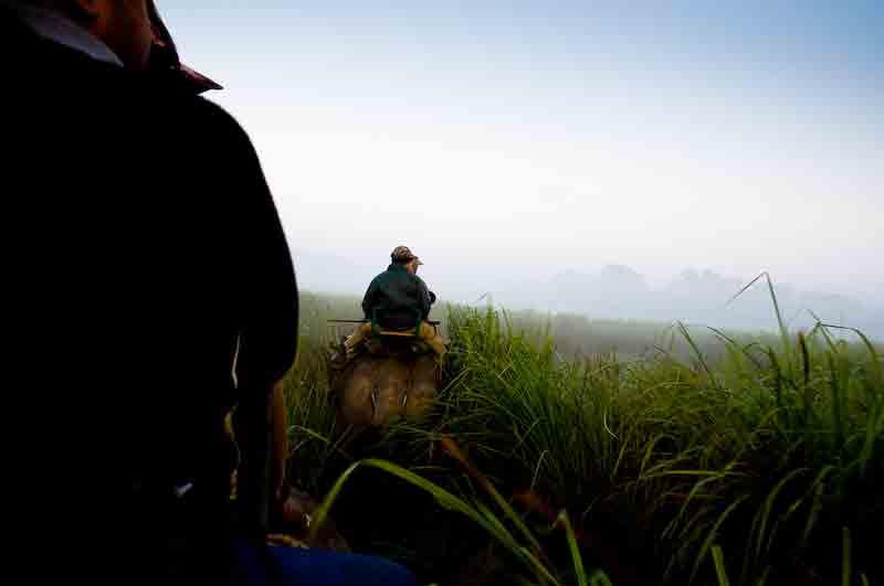 Pobitora Wildlife Sanctuary – The Rhinos' home
